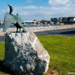 tidy towns May 2014 oyster cormorant